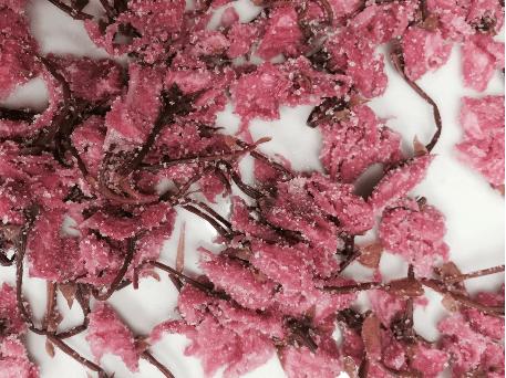 Fleurs de sakura préservées