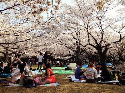 Hanami - Pic nic sous les cerisiers
